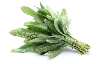 Zdravilne rastline: Žajbelj