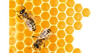 Predavanje: Samopomoč pri pikih žuželk